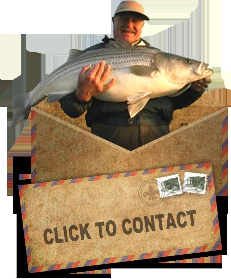Contact BH
